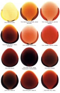 patron-de-colores-en-los-vinos1
